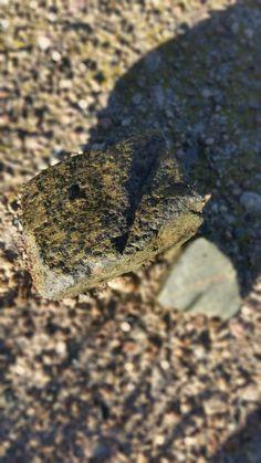 Mars meteorite... MN #ghJohn93Mn