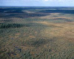 Kurjenrahkan kansallispuisto. Kuva: Lentokuva Vallas