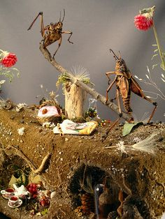 Grasshopper See-Saw, insect diorama by Lisa Wood