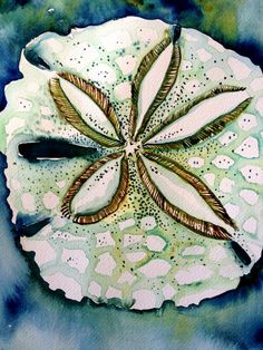 Arrowhead Sand Dollar Original Watercolor by snowseychelle on Etsy