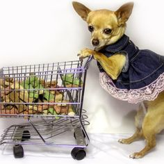Making and selling dog clothing is a great business.
