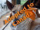 Soi Dog Foundation - Adoptions. People from all over the world are adopting Thai Soi dogs. Its easier than you think.