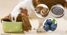 Te podrían sorprender algunos de estos alimentos en esta lista, pero todos ellos impulsan la alimentación cotidiana de tu perro.