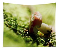 Fungi Tapestry featuring the photograph Fallen Fungi by Helen Kelly Chris Cornell Thank You, Wall Tapestries, Tapestry, Traditional Frames, My Favourite Subject, Wall Spaces, Basic Colors, How To Be Outgoing, Fungi