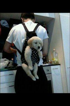 업힌 강아지