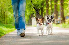 nice 3 Essential Dog Walking Acessories