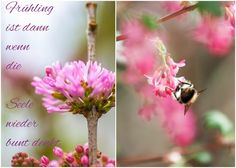 Herzenswärme Bunt, Insects, Plants, Heart, Plant, Planets