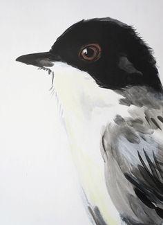 4 new birds - Maartje van den Noort