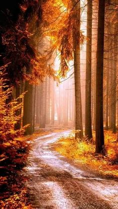 Fall nature photography forest paths 48 ideas for 2019 Fall Pictures, Nature Pictures, Autumn Photography, Landscape Photography, Travel Photography, Woods Photography, Photography Poses, Beautiful Places, Beautiful Pictures