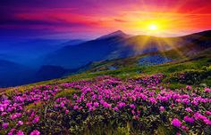 Image result for purple flowers