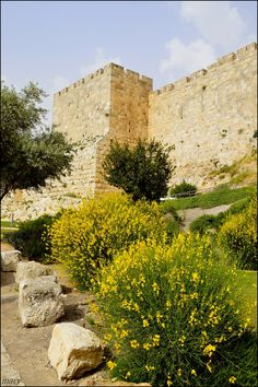 Jerusalem Walls #Jerusalem #Israel  Want to see the world and know someone looking to make a hire? Contact me, carlos@recruitingforgood.com