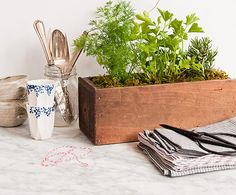 Grow some herbs in your kitchen with these tips. Earth Day, Planter Pots, Diy Ideas, Craft Ideas, Plant Pots