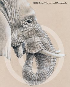 Elephant Profile Fine Art Print by BeckyTylerArt on Etsy