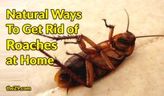 The sight of a roach skittering across the floor is sure to send a chill down any man's spine. While some of us fear them, the others seem to become extrem Ant Insect, Roach Killer, Rid Of Ants, Presents For Women, Roaches, Insect Repellent, Vinyl Projects, Smooth Skin, How To Get Rid