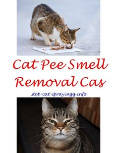 Learn more about cat spray smell dog urine cat spray how to get rid,female cat spraying animals cat pee odor baking soda,cat pee kids cat urine out of couch stains. Cat Pee Smell, Cat Urine Smells, Cat Deterrent Spray, Flea Spray For Cats, Dog Urine, Urine Odor, Male Cat Spraying, Cat Urine Remover, Cat Toilet Training