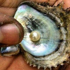 #Pearl #Bahrain