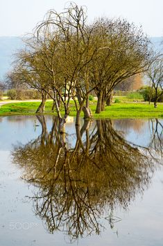 Trees reflection over the lake by Nir Cohen / 500px Reflection, Trees, Explore, Places, Naturaleza, Landscapes, Tree Structure, Wood, Lugares