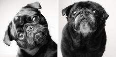 Adorable #puppies become wise adult dogs in heartwarming side-by-side portraits by Amanda Jones. #photography