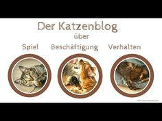 Katzenblog Coco und Nanju - Das Video Videos, Movies, Movie Posters, Funny Photography, Films, Film Poster, Cinema, Movie, Film
