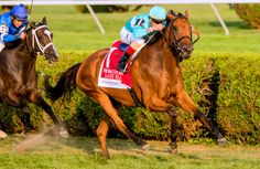 Lady Eli_Ballston Spa, 8/26/17.  That's correct -- Lady Eli, as fantastic as her career has been, has not yet won a year end championship. It's time for that to change.