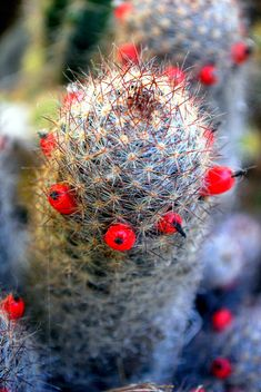 The world is full of Cactus, but we don't have to sit on it.