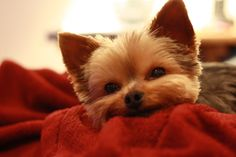 Looks like my lil pup