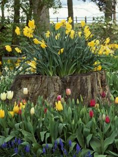 What to Plant in a Rotting Tree Stump