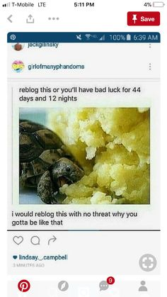 First off why is a turtle eating... mashed potatoes???