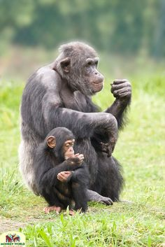 Hananya and his daughter, Thelma at Monkey World, Dorset.