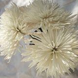 Types of Wedding Flowers | Bride & Blossom- white mum