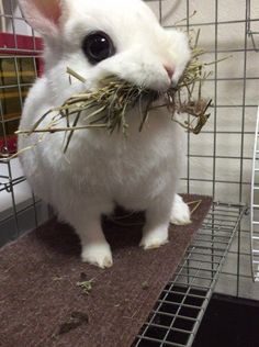 This bunny is too adorable , I'm just NOT loving the cage.