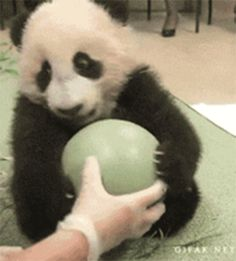 My ball! No! Let go! Stop it! My ball! Mine. | 10 Baby Animals Who Will Force You To Stop What You're Doing