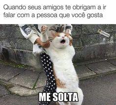 44 Funniest Memes Of The Week Funny Animal Memes, Cat Memes, Funny Cats, Funny Animals, Cute Animals, Anime Meme, Funny Images, Funny Pictures, Funny Spanish Memes