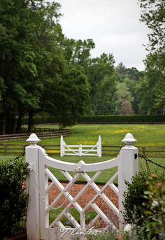 © Planters Garden and Jeremy Smearman. Buckhead Atlanta, GA, Fairfield Rd. -- Jeremy Smearman, chippendale style gate, horse fence, meadow, buttercups, hedge -- Photo is the property of Planters Garden, Jeremy Smearman or is being used under liscense agreement with the owner. All Rights Reserved.