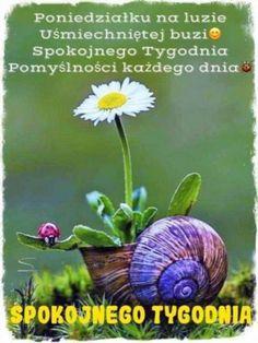 Inspirational Quotes, Plants, Animals, Life Coach Quotes, Animales, Animaux, Inspiring Quotes, Animal, Plant