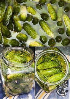 Polish Salted Dill Cucumbers in Brine - Ogórki Małosolne #InheritanceRecipes
