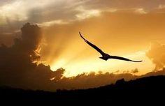 La scelta libera e consapevole è l'atto deliberato che mette in moto il processo creativo.