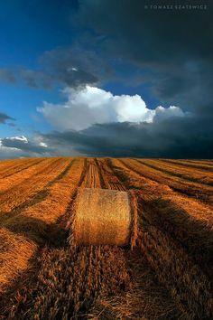 Late summer near Forres by Tomasz Szatewicz   Moray, Scotland
