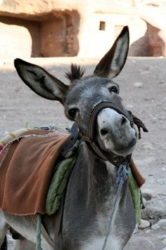 Now do I look like a stubborn animal?-- donkeys are really cute!