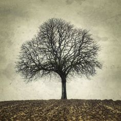 """My Tree, My roots Winter N°2  - Fine Art photographie 8x8"""" or bigger"""