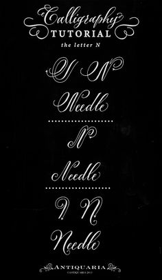 "Antiquaria: Calligraphy Tutorial: the Capital Letter ""W"" Calligraphy Lessons, Calligraphy Doodles, Calligraphy Tutorial, Copperplate Calligraphy, How To Write Calligraphy, Calligraphy Handwriting, Lettering Tutorial, Calligraphy Letters, Typography Letters"