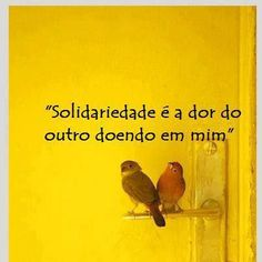 #solidariedade