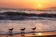 Venice Beach, LA <3