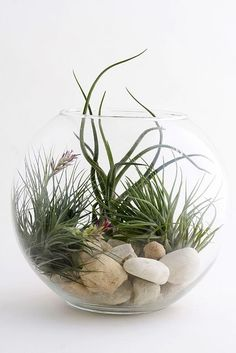 Image result for air plants in globes