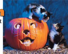 Halloween Safety Tips for Your Cat