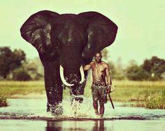 An African Elephant - Abu Elephant Camp. African Elephant, African Animals, African Safari, African Men, African Beauty, Elephant Camp, Elephant Love, Bull Elephant, Beautiful Creatures