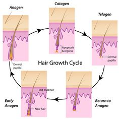 Hair loss blog- helpful information on hair loss products