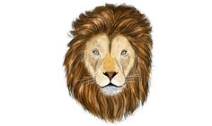 #Lion #ilustracion #photoshop