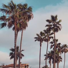 palm // trees