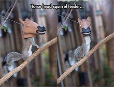 Horse head...